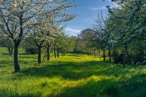 orchard-spring-4158957__340